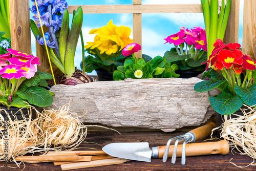obraz dibond Frühling - Ostern - Garten - Frühjahr - Blume