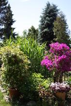 Flowering Garden In Summer