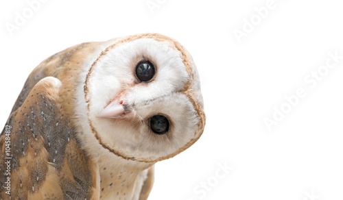 In de dag Uil common barn owl ( Tyto albahead ) isolated