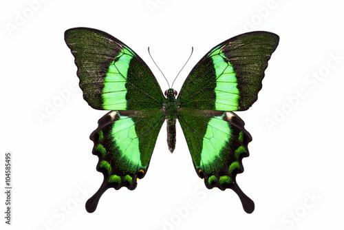 Valokuvatapetti Beautiful butterfly with green wings