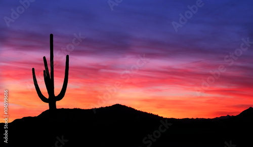 Coral Sunset in the Desert - Colorful Sunset in the Arizona Desert with silhouette of Saguaro Cactus