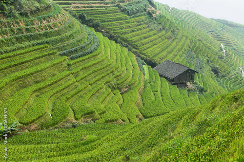 Poster Rijstvelden Views of green Longji terraced fields
