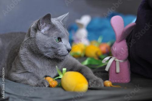 Fototapeta Kot z zajączkiem wielkanocnym obraz