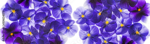 Papiers peints Pansies pansy flower close up - flower background
