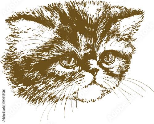 Poster Croquis dessinés à la main des animaux kitten 02