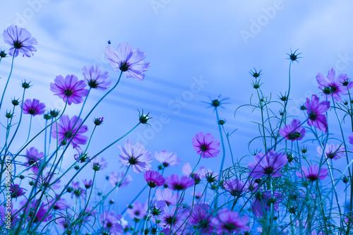 kwiatki-polne-na-niebieskim-tle