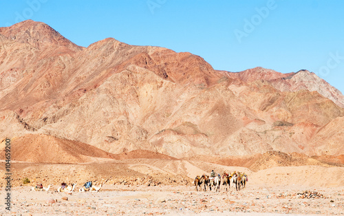 Fotografering  Mountains and camel caravan. Egypt