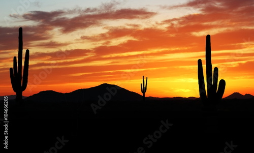 Poster Droogte Sunset in Wild West - Beautiful sunset in the Arizona desert with Silhouette of Cactus and palm trees off in the distance