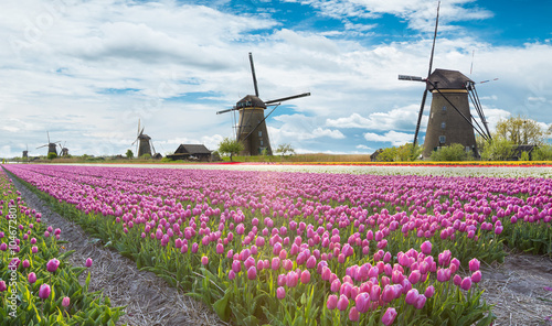 Photo Stands Candy pink Windmill with tulip field in Holland