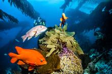 Catalina Island - Scuba Diving
