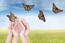 Hands Releasing Butterflies On Meadow