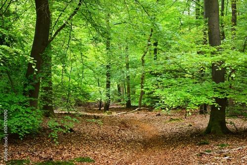 Deurstickers Groene Spring forest in the Netherlands