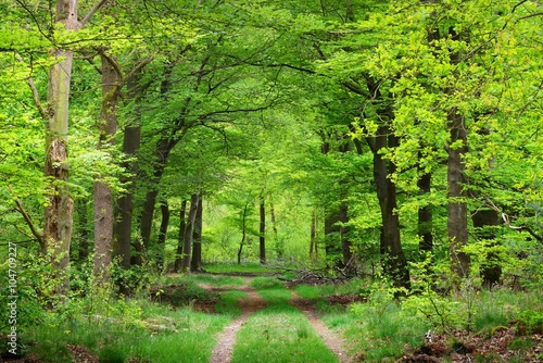 Keuken foto achterwand Bossen Walkway in a spring forest in the Netherlands