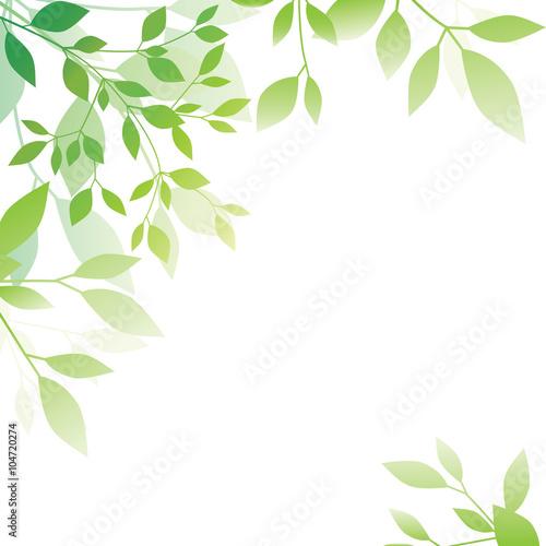Láminas  Green leaf background