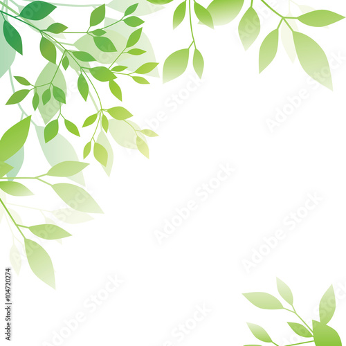 Fotografía  Green leaf background