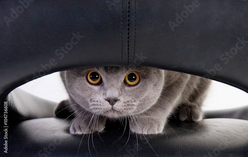Keuken foto achterwand Kat Funny cat looking through a hole