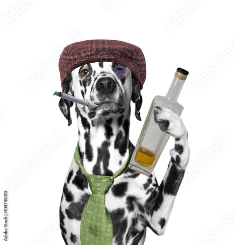 dog drunkard holding a cigarette and a bottle of alcohol - 104748410