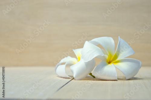 Wall Murals Plumeria White Plumeria flower on wooden board background