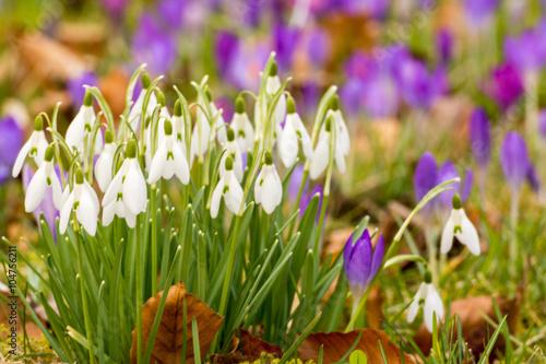 obraz dibond Frühling lässt grüßen