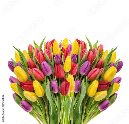 obraz lub plakat Bouquet of fresh spring tulips. Colorful flowers water drops