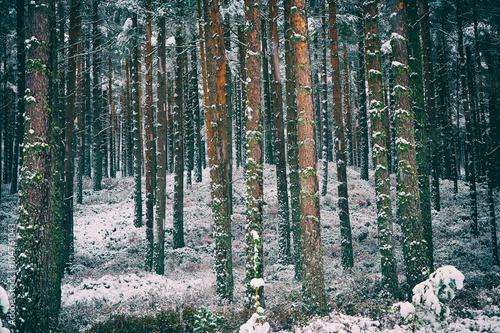 Valokuva  Cairngorms, Scottish Highlands