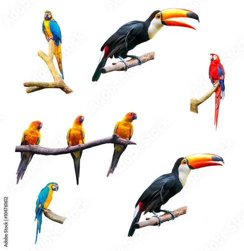 Canvas Print Set of isolated tropical parrots on a white background