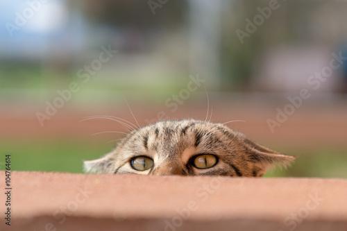 Valokuva  Gatto curioso