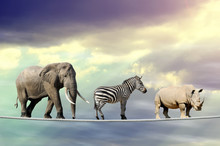 Elephant, Zebra, Rhino Walking On A Rope
