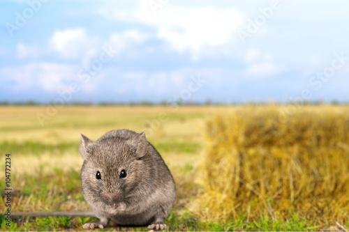 Fotografía  Mouse.