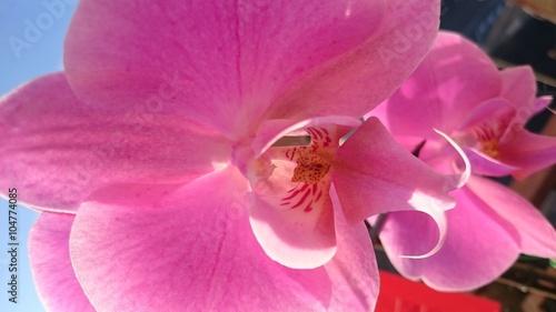 Orchidea - fiore viola