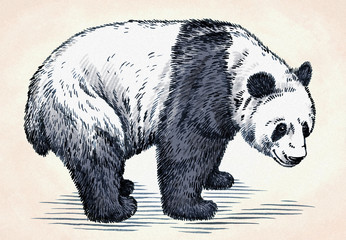 Obraz na Szkleengrave ink draw panda illustration
