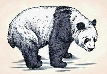 Fototapeta Panda engrave ink draw panda illustration