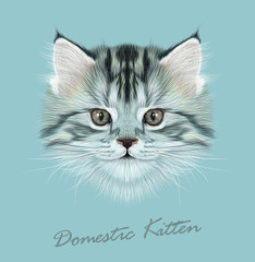 FototapetaKitten animal cute face. Vector funny cat head portrait. Realistic fur portrait of little grey kitty isolated on blue background.