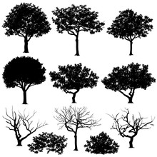 Set Of Trees In Silhouettes. A...