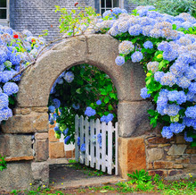 Blue Flowers Decorating A Gate In Brittany, France