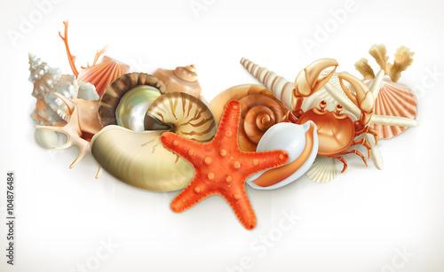 Fotografie, Obraz  Set of seashells, vector illustration