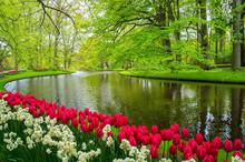 Beautiful Spring Flowers Near ...
