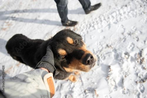 Deurstickers Ontspanning Dog for adoption