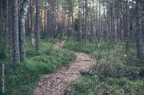 Wall Murals Forest Path in a forest