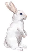 White Rabbit Isolated