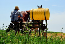 Lancaster County, Pennsylvania - June 8, 2015: Amish Youth Seated On A Plow With Large Plastic Drum At Work Irrigating A Field Pulled By A Team Of Two Horses *