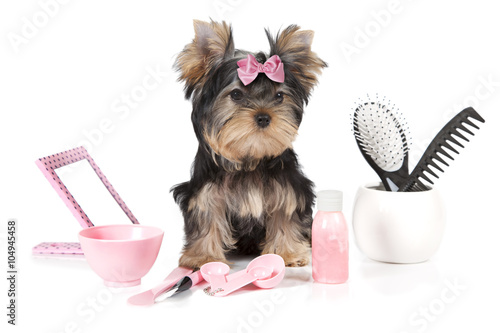 Fotografía  Yorkshire terrier with grooming products