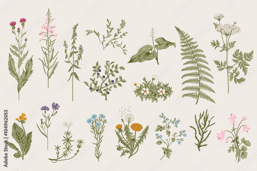 Fototapeta Herbs and Wild Flowers. Botany. Set. Vintage flowers. Colorful illustration in the style of engravings.