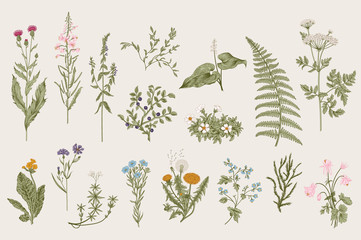 FototapetaHerbs and Wild Flowers. Botany. Set. Vintage flowers. Colorful illustration in the style of engravings.