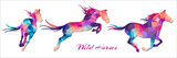 Fototapeta Horses - wild horses