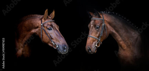 Foto op Canvas Paarden Couple of horses isolated on black web banner
