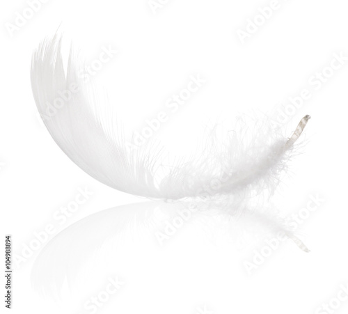 fluffy white isolated feather with reflection
