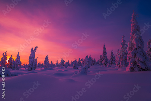 Printed kitchen splashbacks Eggplant Winter landscape with forest, cloudy sky and sunset.