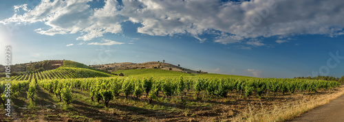 Wall Murals Vineyard Vigna italiana
