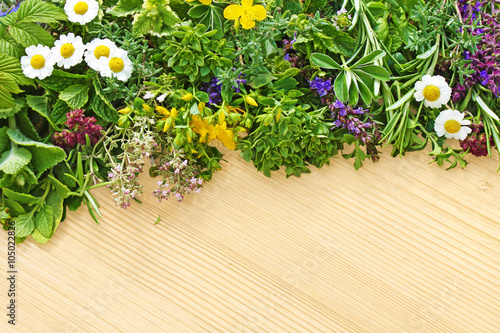 fototapeta na szkło kräuter und heilpflanzen